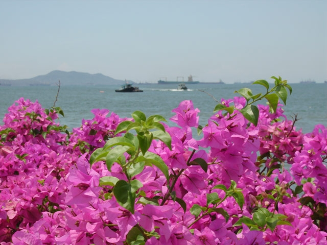 Lovely flowers by the sea in Thailand
