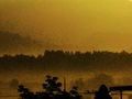 Sunrise Over Nong Kor in Si Racha